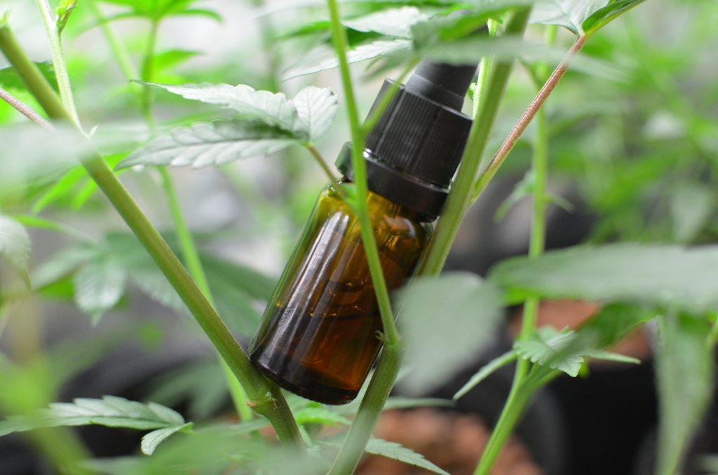 CBD Öl in einer Pflanze stehend